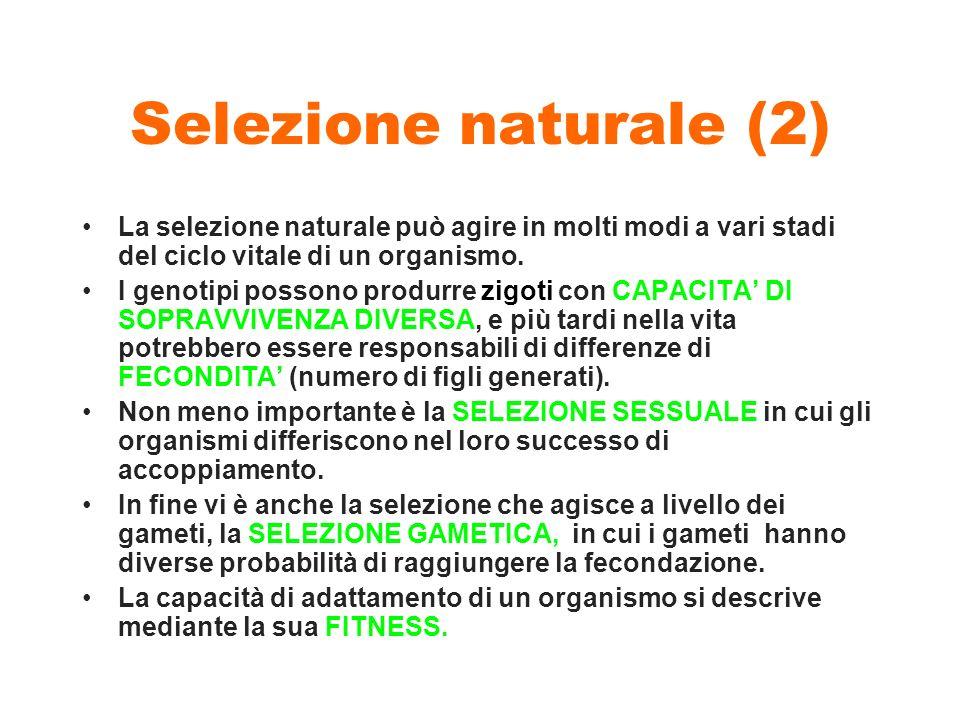 Selezione naturale (2) La selezione naturale può agire in molti modi a vari stadi del ciclo vitale di un organismo. I genotipi possono produrre zigoti