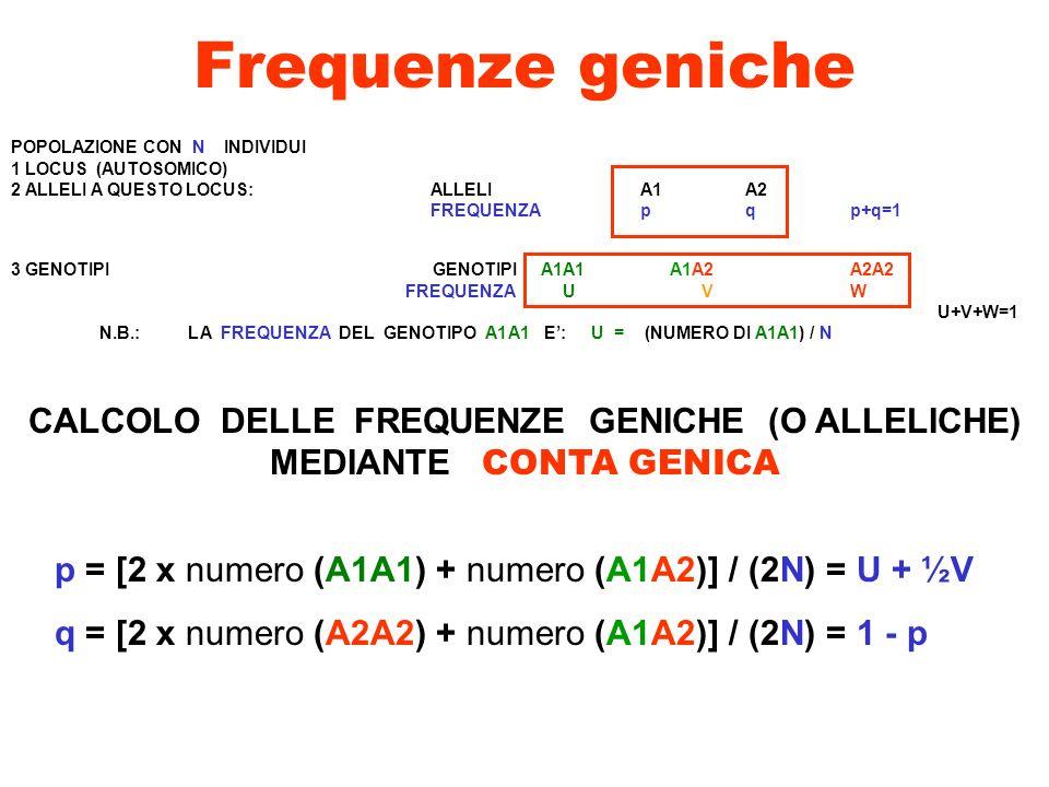 Esempio di calcolo di frequenze geniche POPOLAZIONE CON 100 INDIVIDUI GENOTIPI A1A1 A1A2 A2A2 NUMERO INDIVIDUI81181 N=100 U = 0.81 V = 0.18 W = 0.01 p = U+ ½ V = 0.81 + 0.09 = 0.90 q = 1 – p = 0.10