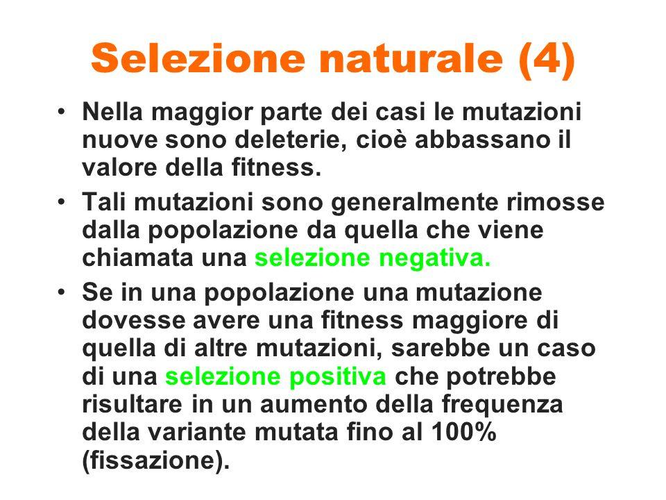 Selezione naturale (4) Nella maggior parte dei casi le mutazioni nuove sono deleterie, cioè abbassano il valore della fitness. Tali mutazioni sono gen