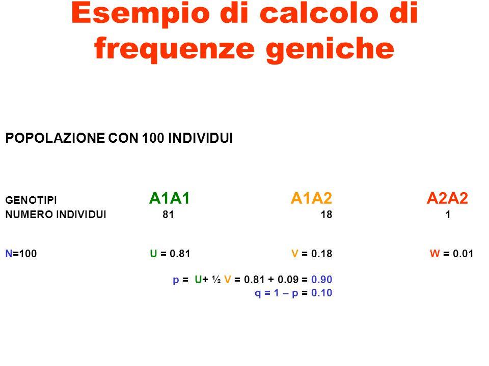 Esempio di calcolo di frequenze geniche POPOLAZIONE CON 100 INDIVIDUI GENOTIPI A1A1 A1A2 A2A2 NUMERO INDIVIDUI81181 N=100 U = 0.81 V = 0.18 W = 0.01 p