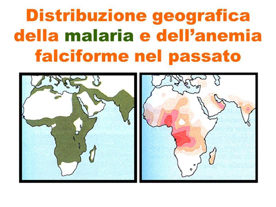 Distribuzione geografica della malaria e dellanemia falciforme nel passato