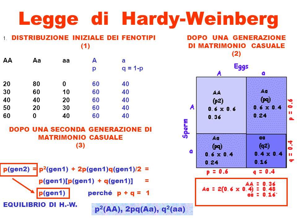 Test di equilibrio di Hardy-Weinberg 160 INDIVIDUI SONO STATI SAGGIATI PER LENZIMA PGM1 (alleli 1 e 2 con frequenze p e q, 1p22.1) MEDIANTE ELETTROFORESI FENOTIPO1 – 11 – 22 – 2N NUMERO INDIVIDUI OSSERVATI777112160 CONTA GENICAp = (154 +71) / 320= 0.703 q = 0.297 NUMERO INDIVIDUI ATTESI IN BASE ALLA LEGGE DI EQUILIBRIO DI HARDY-WEINBERG Np 2 N2pqNq 2 78.467.214.4 Test del chi-quadrato
