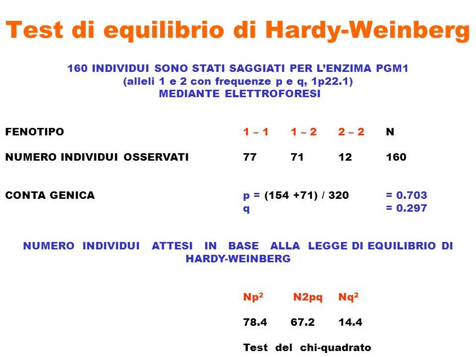 Test di equilibrio di Hardy-Weinberg 160 INDIVIDUI SONO STATI SAGGIATI PER LENZIMA PGM1 (alleli 1 e 2 con frequenze p e q, 1p22.1) MEDIANTE ELETTROFOR