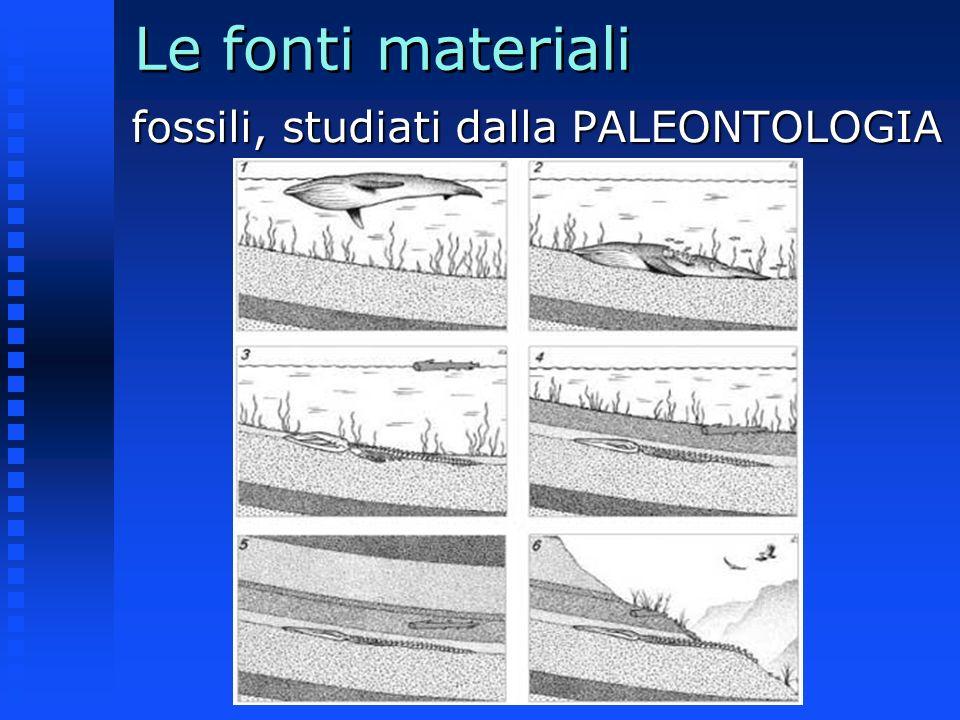 Le fonti materiali Trilobite proveniente dalla Cina Ammonite
