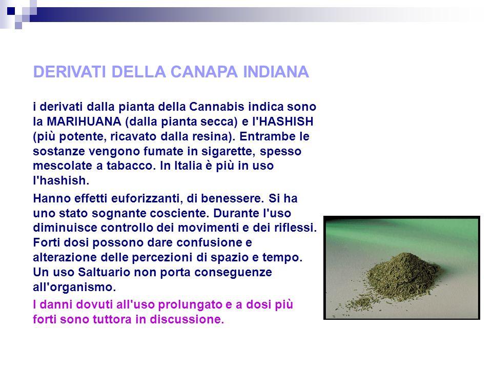 DERIVATI DELLA CANAPA INDIANA i derivati dalla pianta della Cannabis indica sono la MARIHUANA (dalla pianta secca) e l HASHISH (più potente, ricavato dalla resina).