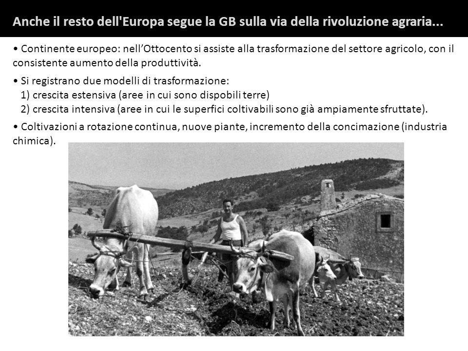 Continente europeo: nellOttocento si assiste alla trasformazione del settore agricolo, con il consistente aumento della produttività.