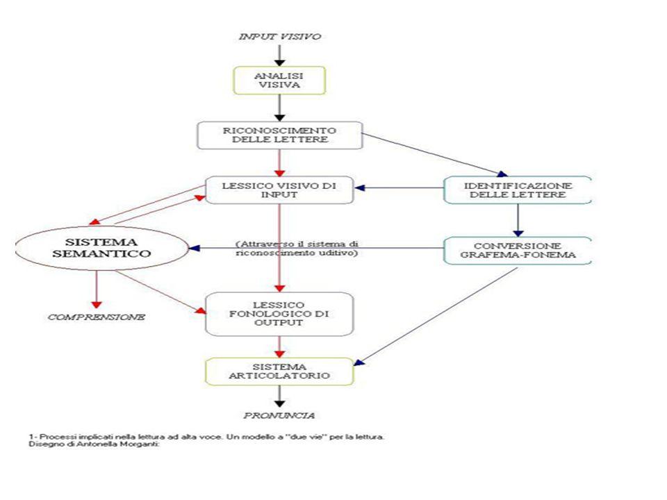 ANALISI VISIVA IDENTIFICAZIONE ASTRATTA DELLE LETTERE RICONOSCIMENTO ORTOGRAFICO DELLA PAROLA COMPOSIZIONE FORMA FONOLOGICA ANALIZZATORE FONEMICO SISTEMA SEMANTICO ANALIZZATORE GRAFEMICO MECCANISMI DI PRODUZIONE