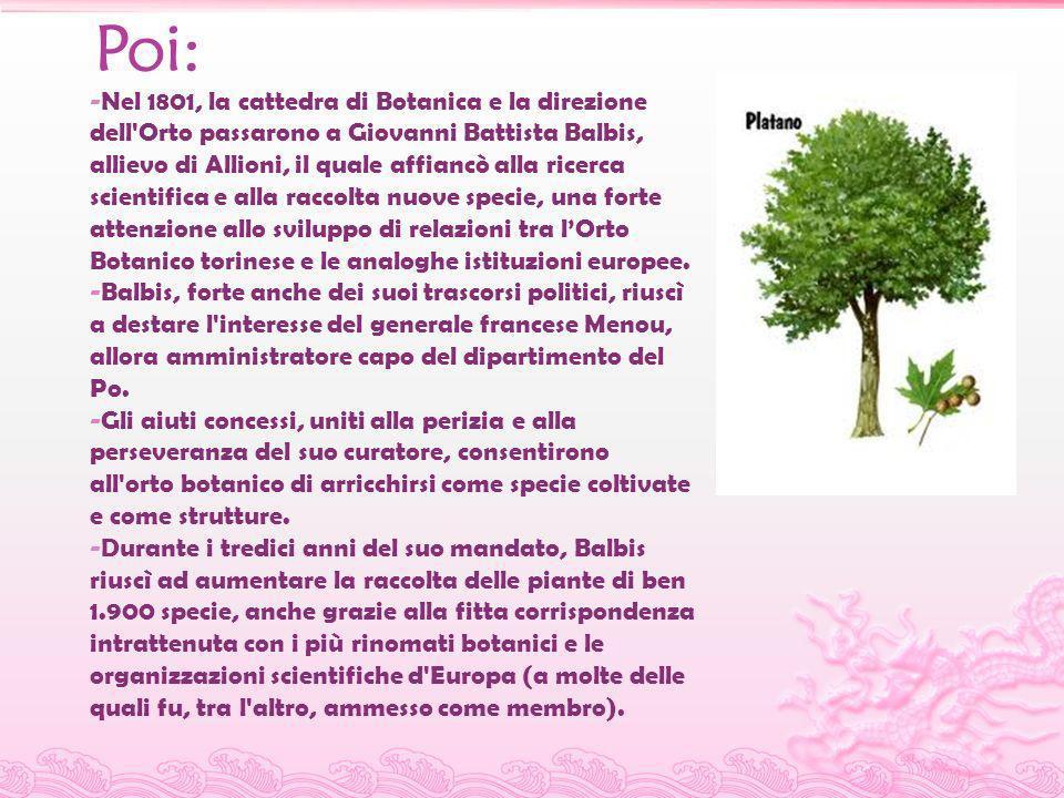Poi: -Nel 1801, la cattedra di Botanica e la direzione dell'Orto passarono a Giovanni Battista Balbis, allievo di Allioni, il quale affiancò alla rice
