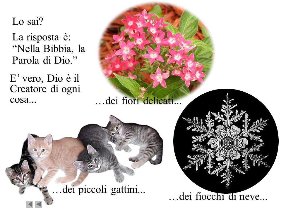 Lo sai? E vero, Dio è il Creatore di ogni cosa... …dei piccoli gattini... …dei fiori delicati... …dei fiocchi di neve... La risposta è: Nella Bibbia,