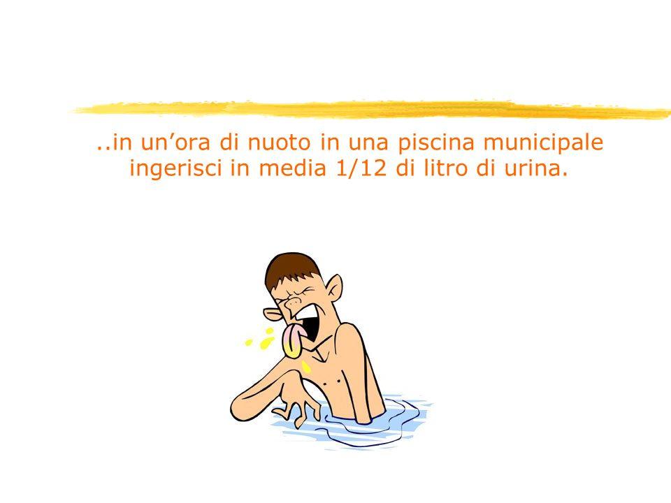 ..in unora di nuoto in una piscina municipale ingerisci in media 1/12 di litro di urina.