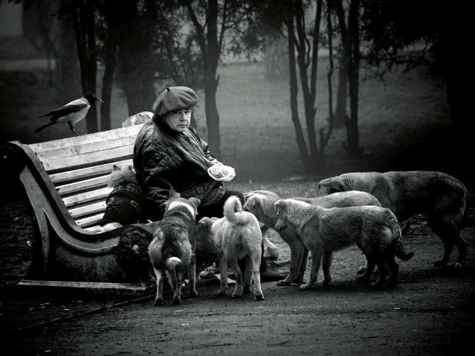 1 - Nessun animale deve essere usato per il divertimento dell'uomo. 2 - Le esibizioni di animali e gli spettacoli che utilizzano animali sono incompat