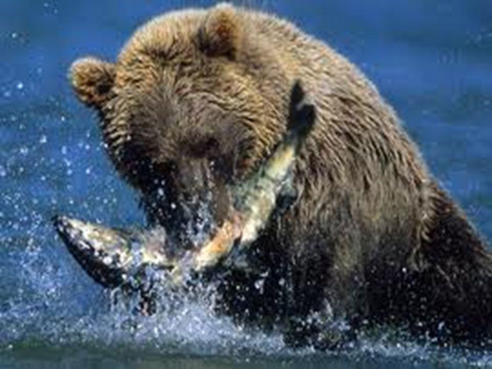 Molti animali sono anch'essi carnivori; cosa dobbiamo pensare? E perché dunque dovremmo esigere dagli animali un comportamento che noi stessi, in larg