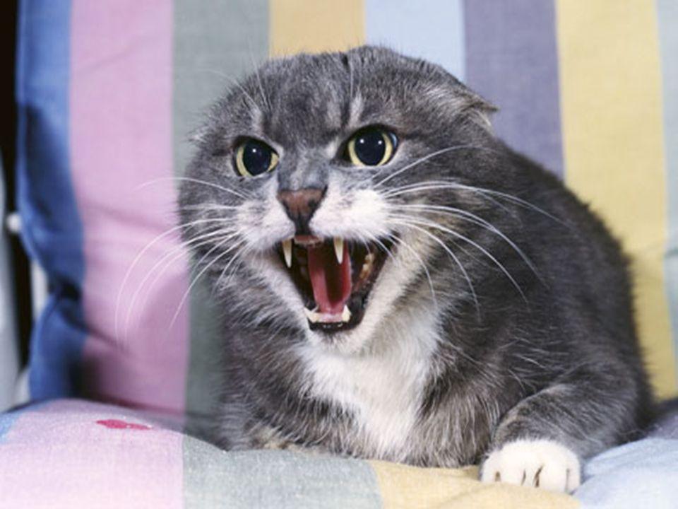 Come dobbiamo intendere l'atteggiamento di un gatto col topo, ad esempio? Nel suo modo di essere cacciatore, ci sembra a volte di vedere una manifesta