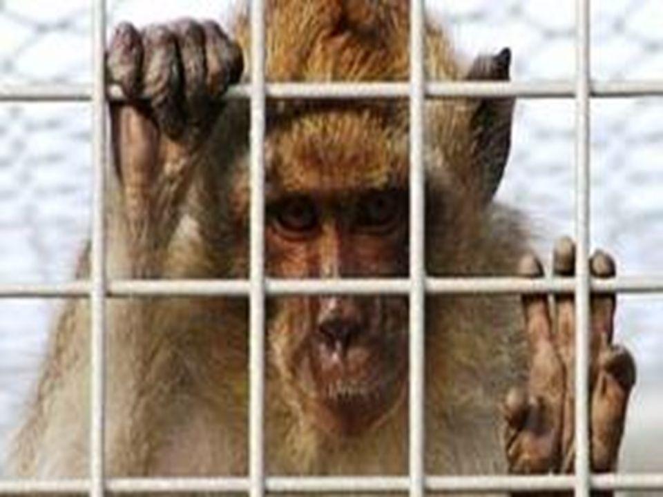 Per averne la prova costante, basta osservare il mondo. Le sofferenze e le torture inflitte all'animale così come le condizioni di detenzione (allevam
