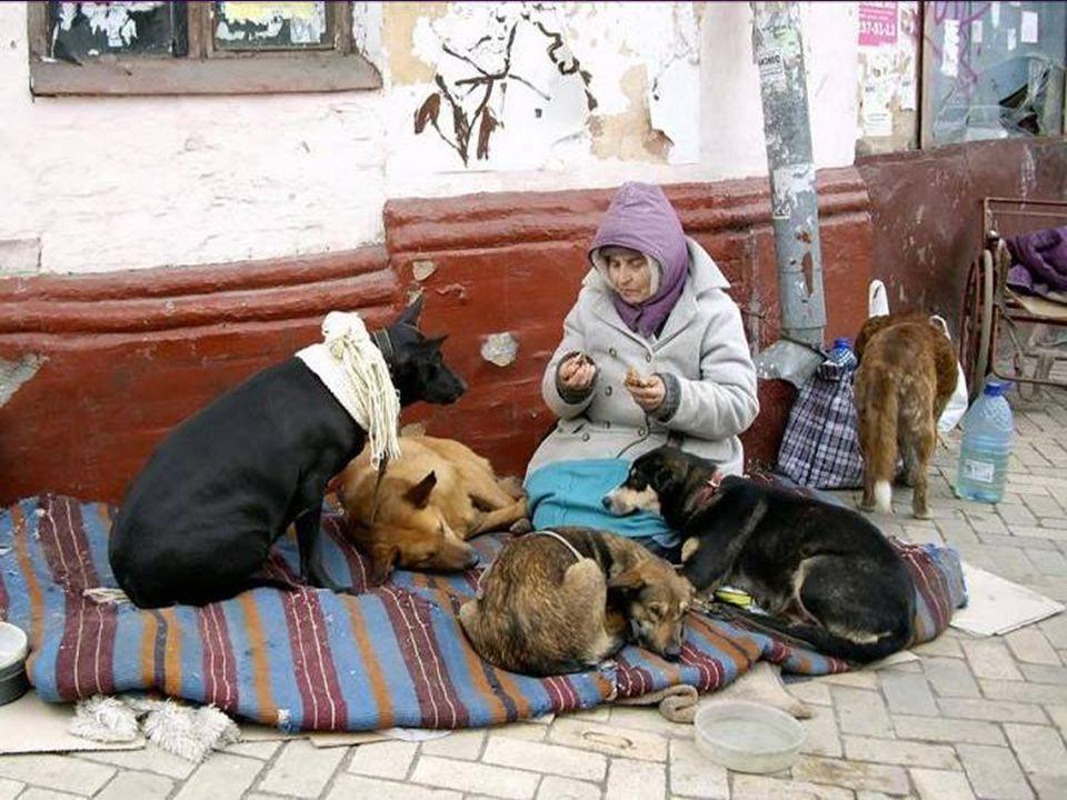 Un tentativo di conciliazione con la specie animale interessata, deve dunque essere la nostra prima reazione. La cosa richiede, per riassumere, un po'