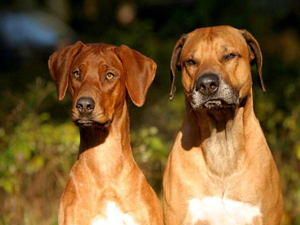 1 - Ogni animale ha diritto al rispetto. 2 - L'uomo, in quanto specie animale, non può attribuirsi il diritto di sterminare gli altri animali, o di sf