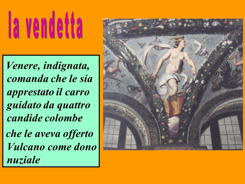 Venere, indignata, comanda che le sia apprestato il carro guidato da quattro candide colombe che le aveva offerto Vulcano come dono nuziale