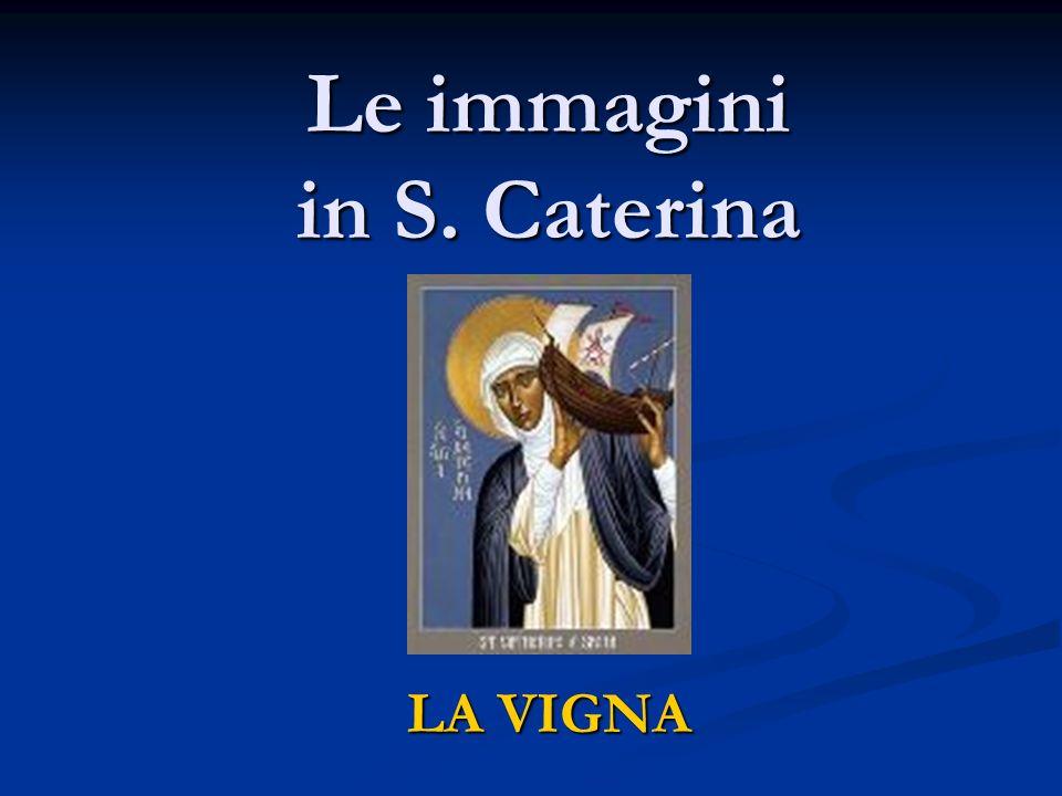 Le immagini in S. Caterina LA VIGNA