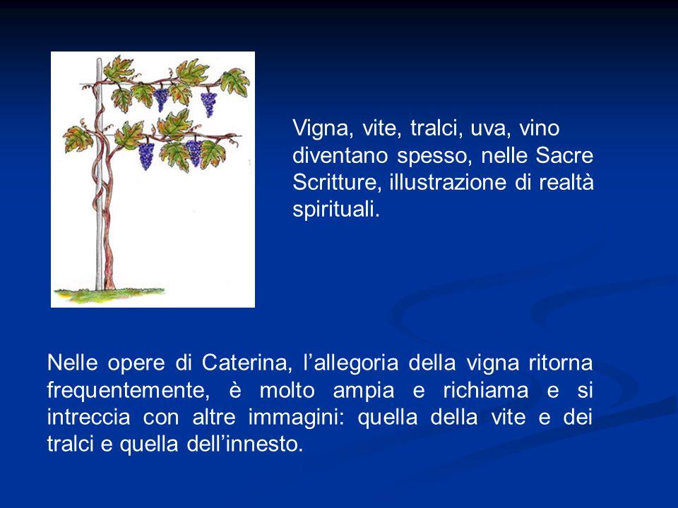 Vigna, vite, tralci, uva, vino diventano spesso, nelle Sacre Scritture, illustrazione di realtà spirituali.