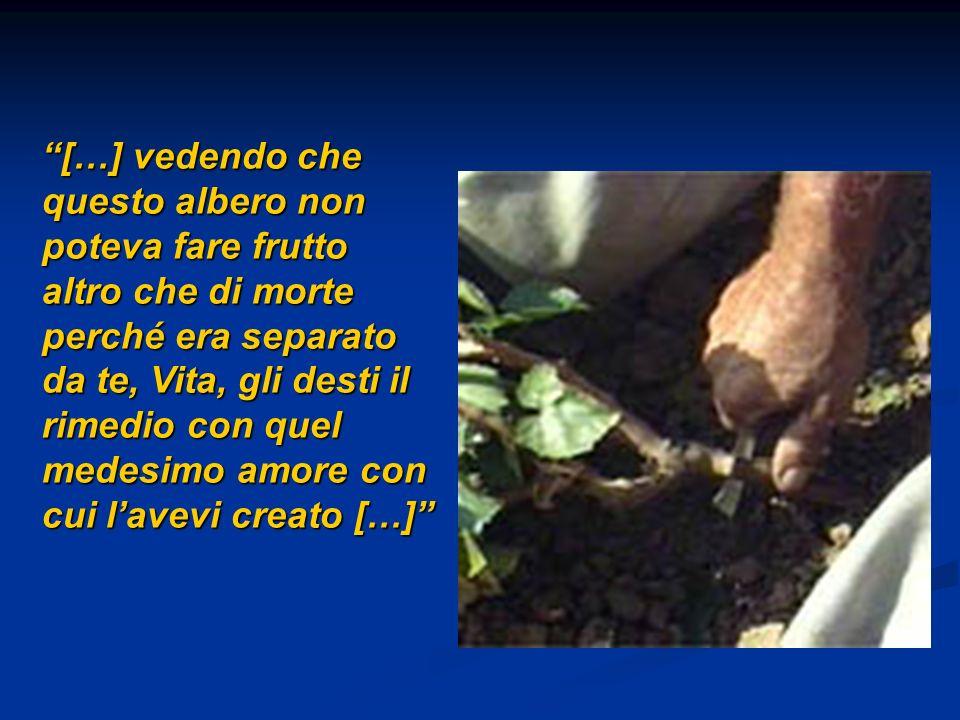 […] vedendo che questo albero non poteva fare frutto altro che di morte perché era separato da te, Vita, gli desti il rimedio con quel medesimo amore con cui lavevi creato […]