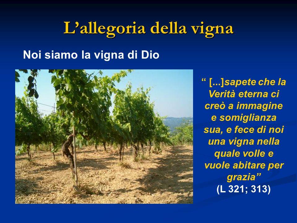 Lallegoria della vigna Noi siamo la vigna di Dio [...]sapete che la Verità eterna ci creò a immagine e somiglianza sua, e fece di noi una vigna nella quale volle e vuole abitare per grazia (L 321; 313)