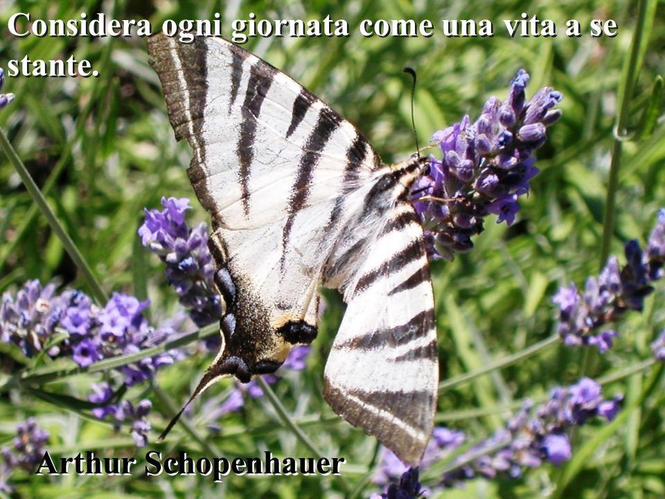 La vita è il fiore per il quale l amore è il miele. Victor Hugo