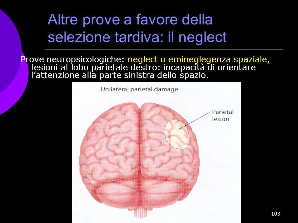 103 Altre prove a favore della selezione tardiva: il neglect Prove neuropsicologiche: neglect o emineglegenza spaziale, lesioni al lobo parietale dest