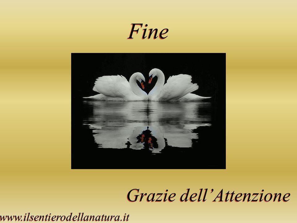 Fine Grazie dellAttenzione www.ilsentierodellanatura.it