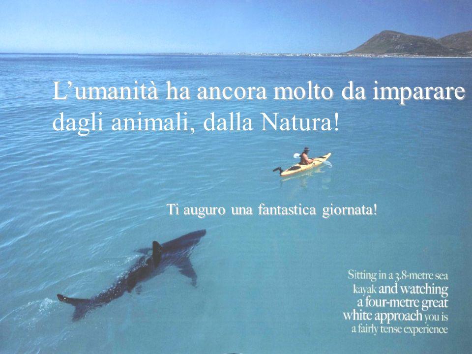 Lumanità ha ancora molto da imparare dagli animali, dalla Natura! Ti auguro una fantastica giornata!