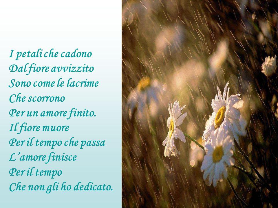 I petali che cadono Dal fiore avvizzito Sono come le lacrime Che scorrono Per un amore finito.