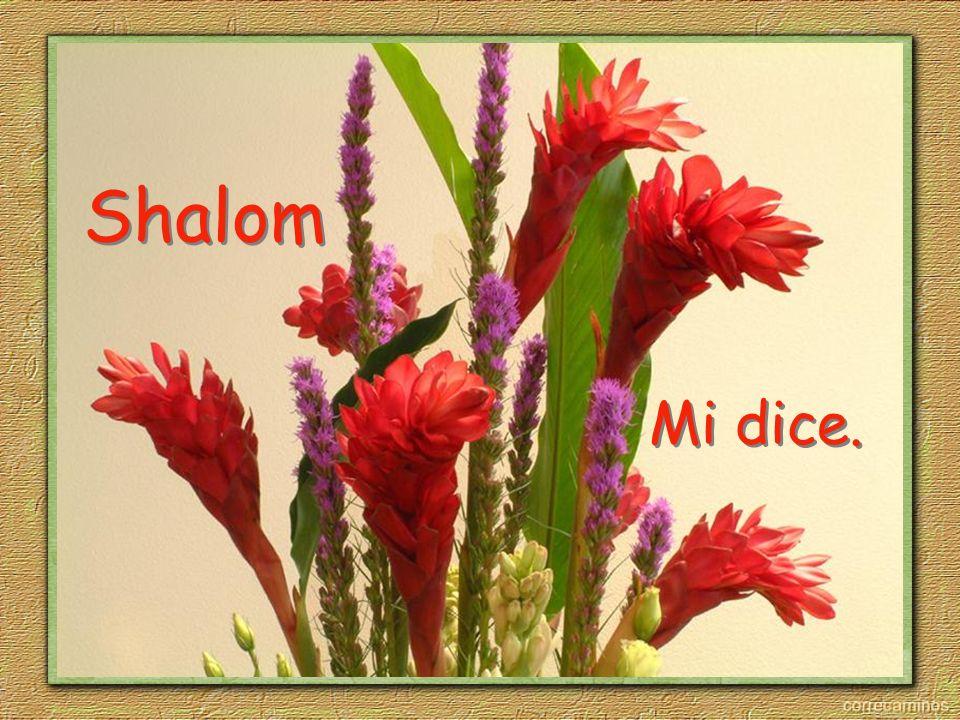 Shalom Shalom Mi dice.