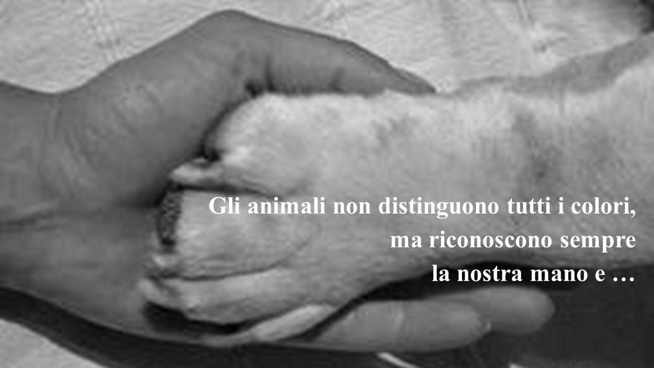 Gli animali non distinguono tutti i colori, ma riconoscono sempre la nostra mano e …