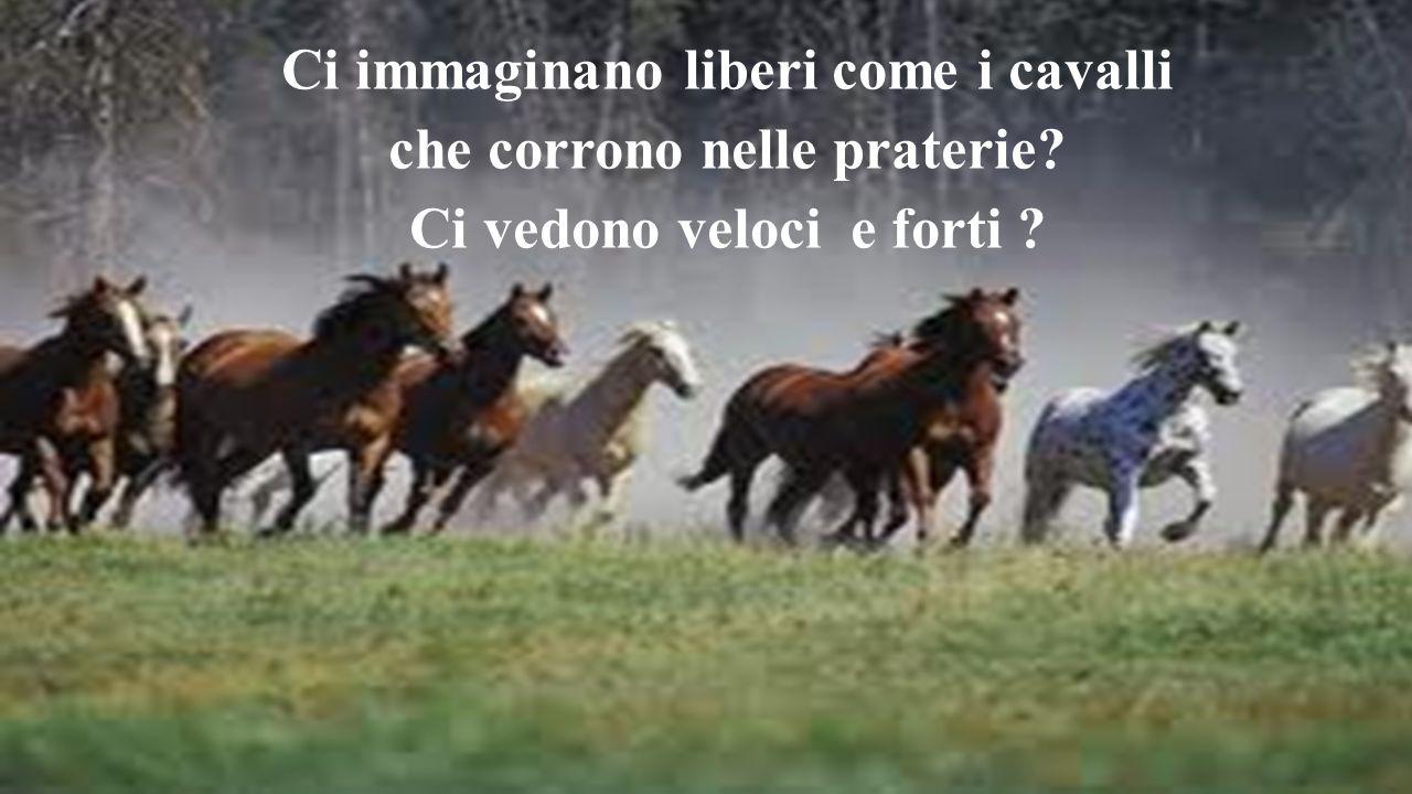 Ci immaginano liberi come i cavalli che corrono nelle praterie? Ci vedono veloci e forti ?