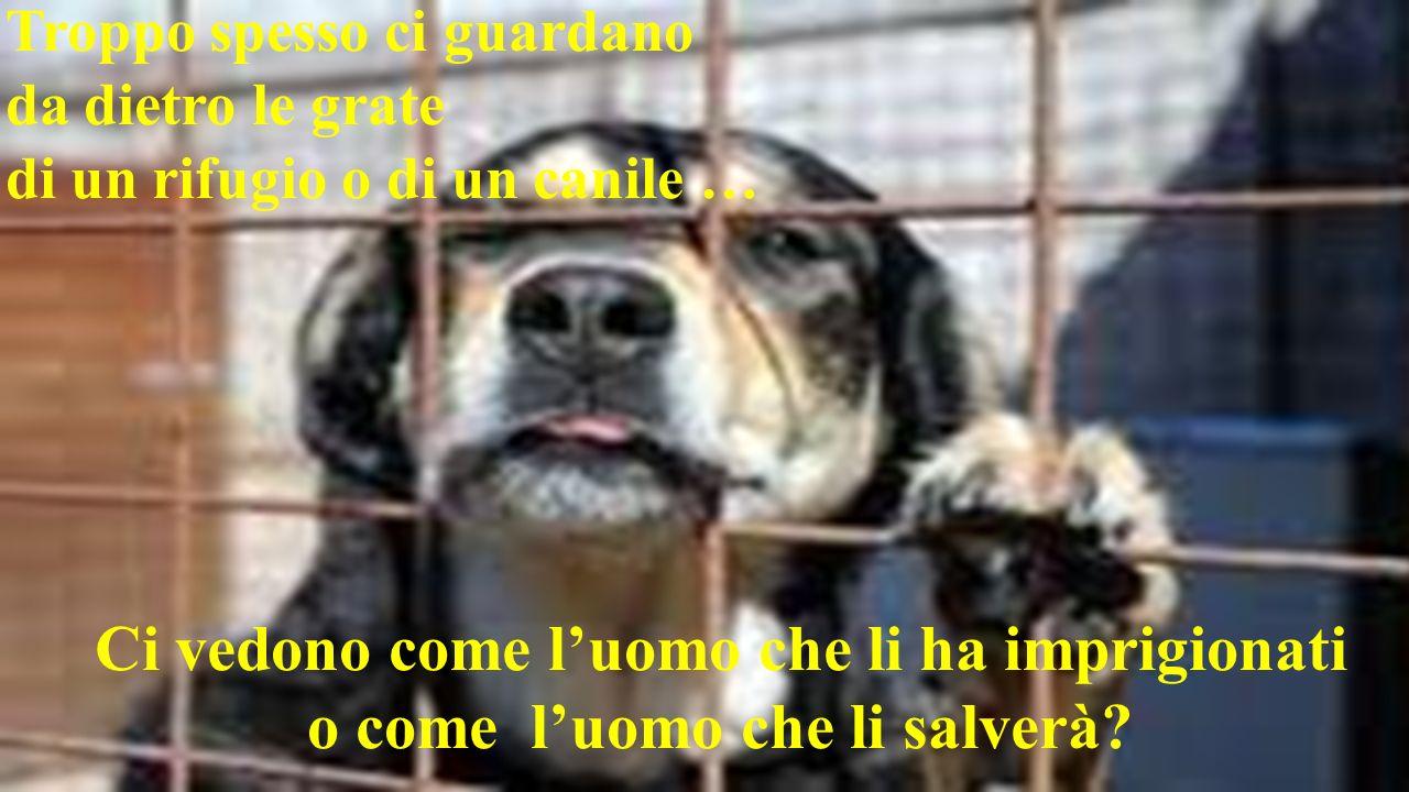 Troppo spesso ci guardano da dietro le grate di un rifugio o di un canile … Ci vedono come luomo che li ha imprigionati o come luomo che li salverà?