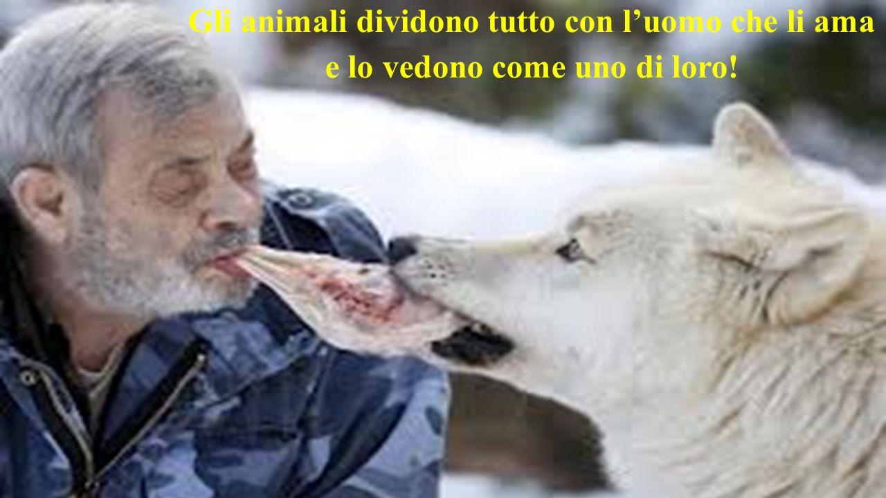 Gli animali dividono tutto con luomo che li ama e lo vedono come uno di loro!