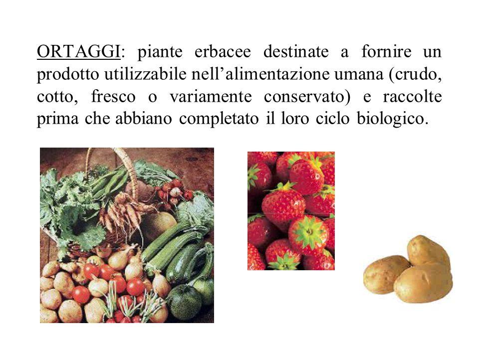 ORTAGGI: piante erbacee destinate a fornire un prodotto utilizzabile nellalimentazione umana (crudo, cotto, fresco o variamente conservato) e raccolte