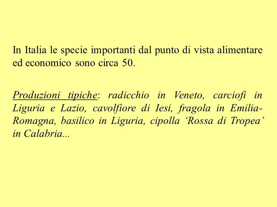 In Italia le specie importanti dal punto di vista alimentare ed economico sono circa 50. Produzioni tipiche: radicchio in Veneto, carciofi in Liguria