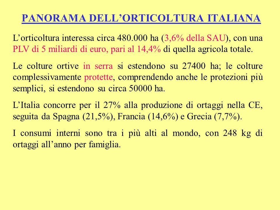 PANORAMA DELLORTICOLTURA ITALIANA Lorticoltura interessa circa 480.000 ha (3,6% della SAU), con una PLV di 5 miliardi di euro, pari al 14,4% di quella