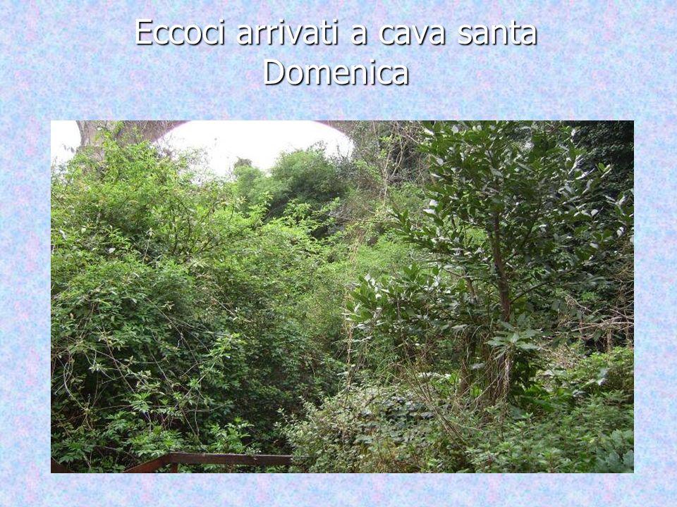 Siamo andati a fare un escursione in questa cava che si trova a Ragusa.