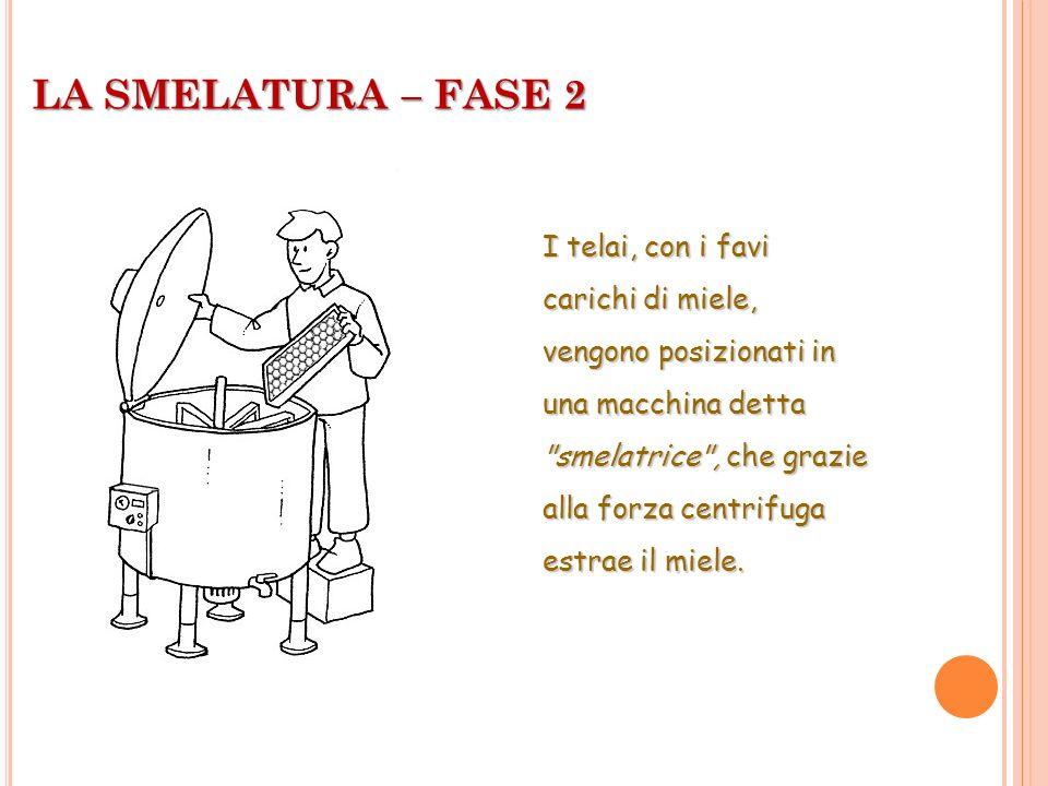 LA SMELATURA – FASE 2 I telai, con i favi carichi di miele, vengono posizionati in una macchina detta