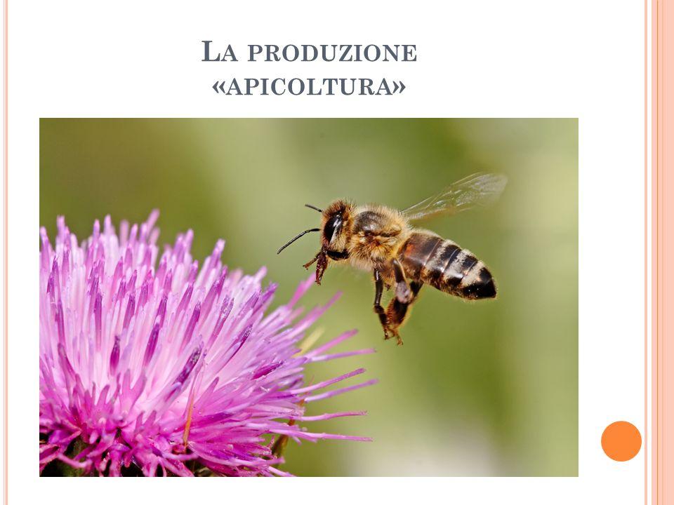 L A PRODUZIONE « APICOLTURA »