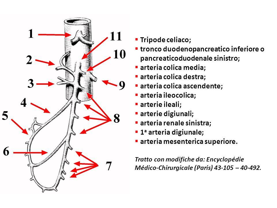 Tripode celiaco; tronco duodenopancreatico inferiore o pancreaticoduodenale sinistro; arteria colica media; arteria colica destra; arteria colica asce