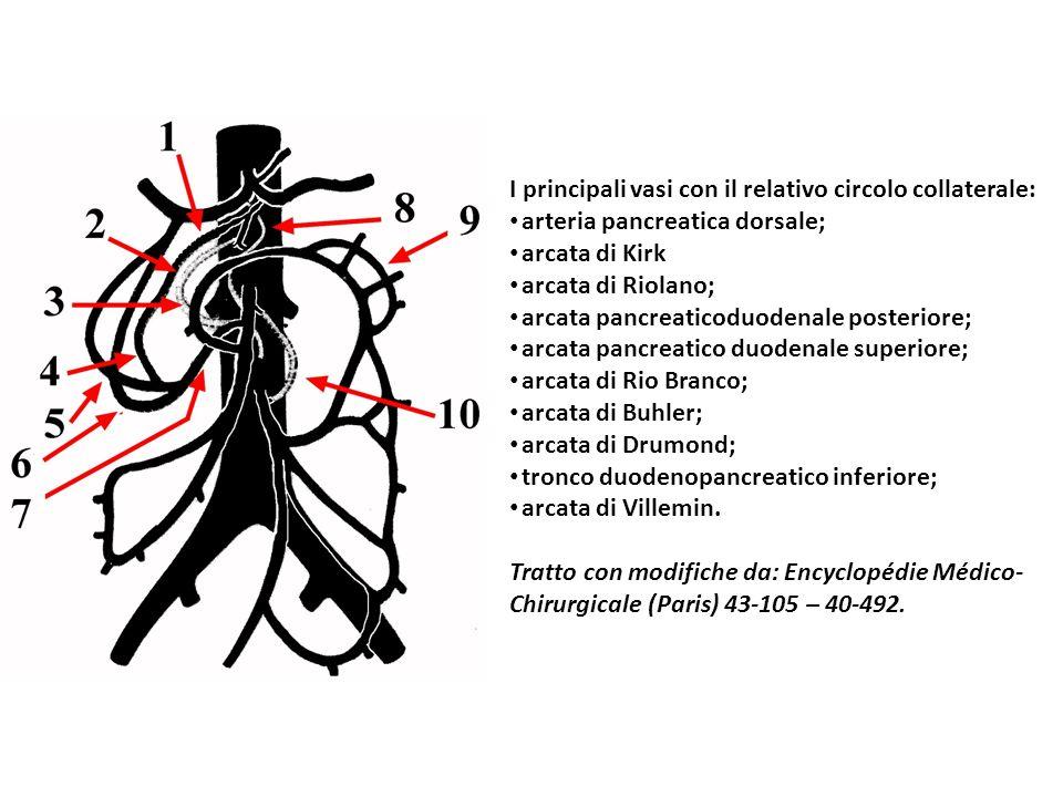 I principali vasi con il relativo circolo collaterale: arteria pancreatica dorsale; arcata di Kirk arcata di Riolano; arcata pancreaticoduodenale post