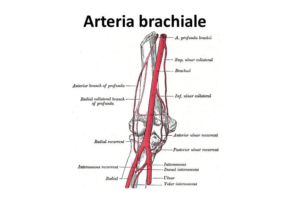 Il Sistema renina-angiotensina-aldosterone è un meccanismo ormonale che regola la pressione sanguigna, il volume plasmatico circolante (volemia) ed il tono della muscolatura arteriosa attraverso diversi meccanismi.