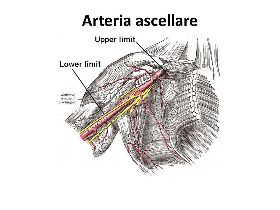 Le stenosi dellarteria renale possono manifestarsi clinicamente con: ridotta funzionalità renale; ipertensione arteriosa sistemica.