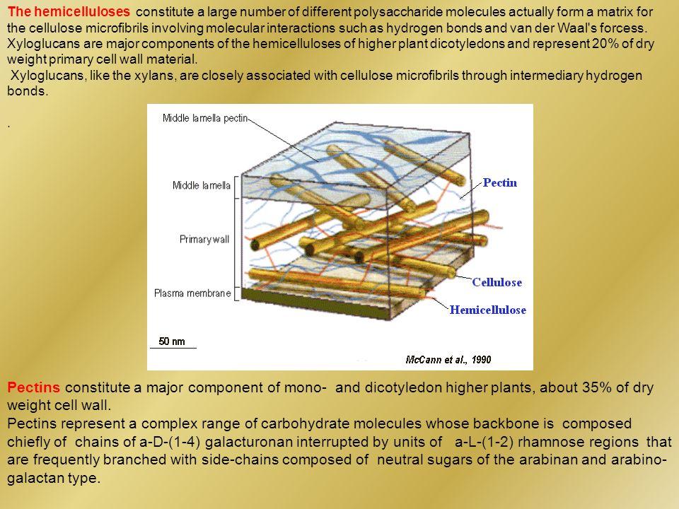 13 C CP-MAS cellulosa I differenti profili C1, C4 e C6 sharp diversa intensità segnali broad diversi chemical shift IPOTESI: Eterogeneità nella struttura cristallina, 2 forme cristalline differenti indipendenti per quali gli anidroglucosi non risultano equivalenti allinterno della cella cristallina