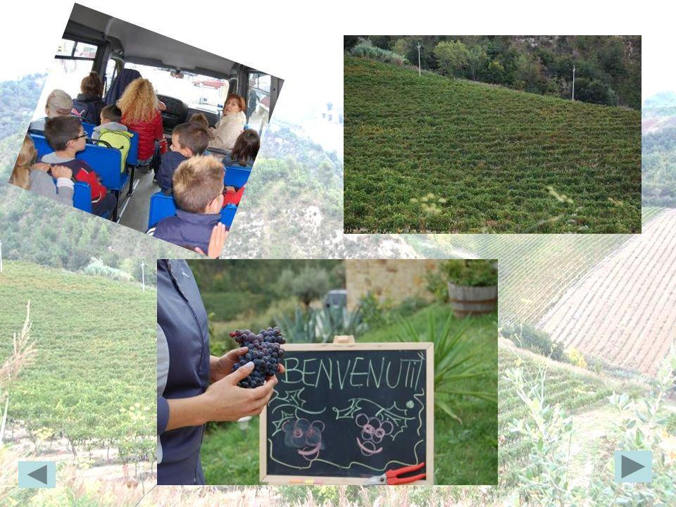 Venerdì 04 ottobre 2013 noi alunni delle classi 3°e 4° ci siamo recati a visitare lazienda vinicola Pantaleone in località Colonnata Alta.