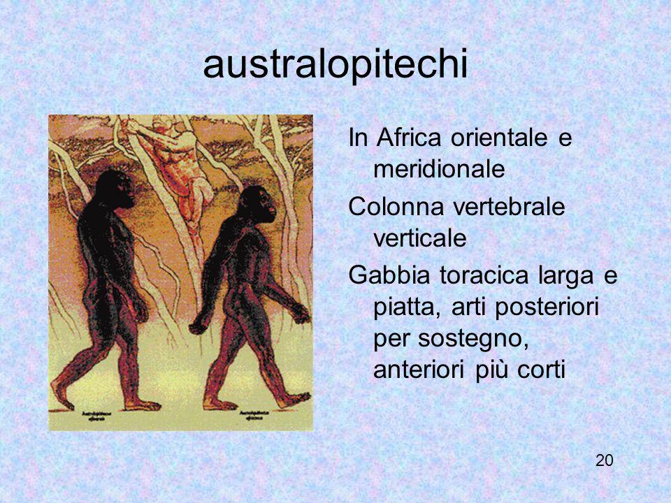australopitechi In Africa orientale e meridionale Colonna vertebrale verticale Gabbia toracica larga e piatta, arti posteriori per sostegno, anteriori