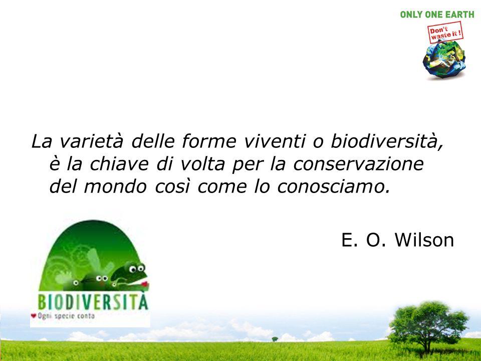 La varietà delle forme viventi o biodiversità, è la chiave di volta per la conservazione del mondo così come lo conosciamo.
