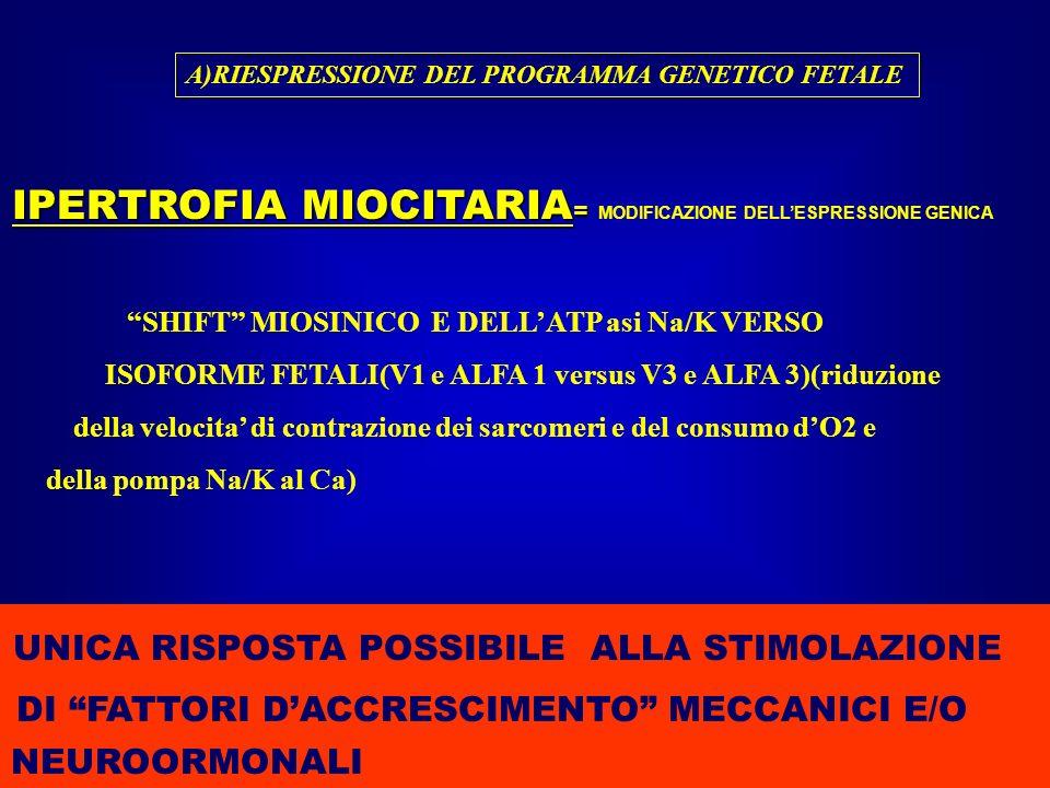 A)RIESPRESSIONE DEL PROGRAMMA GENETICO FETALE IPERTROFIA MIOCITARIA = IPERTROFIA MIOCITARIA = MODIFICAZIONE DELLESPRESSIONE GENICA SHIFT MIOSINICO E D